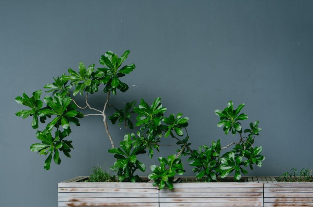 Pflanzen kinderleicht zu Hause anbauen